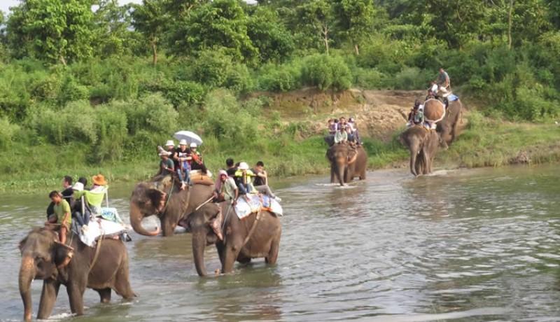 Chitwan Jungle Safari Tour 1 Night