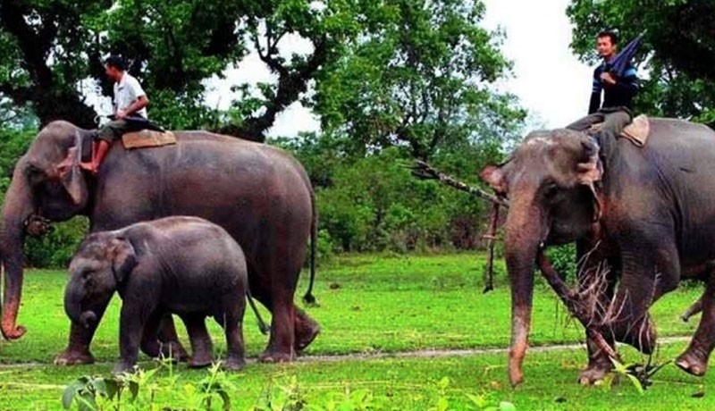 Chitwan National Park Safari Tour - 3 Days