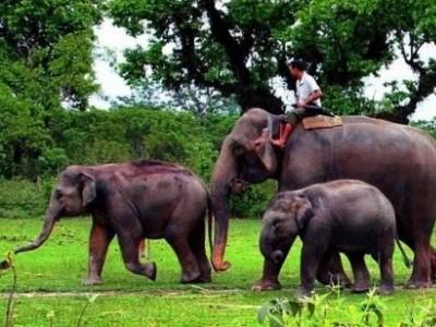 Chitwan National Park Safari Tour - 3 Days