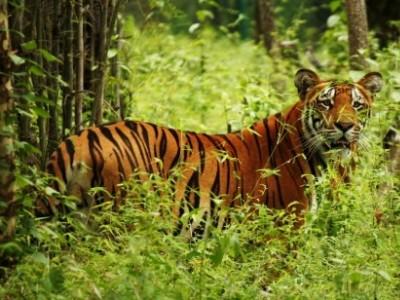 Chitwan National Park Safari Tour - 4 Days